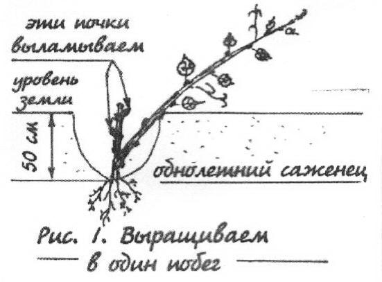 Дмитриев Идеальный Виноградник Скачать